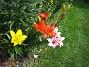 IMG_0040  2011-07-12 IMG_0040