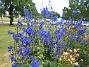 IMG_0043  2011-07-12 IMG_0043