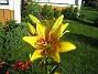 IMG_0102  2011-07-12 IMG_0102