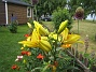Liljor  2011-07-13 IMG_0033
