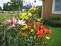 Liljor  2011-07-13 IMG_0043