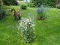 IMG_0099  2011-07-13 IMG_0099