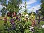 IMG_0118  2011-07-16 IMG_0118