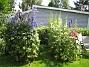 IMG_0119  2011-07-16 IMG_0119