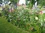 Bakgården  2011-07-17 IMG_0218