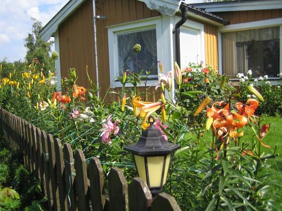 Liljor &nbsp 2011-07-31 IMG_0037 Granudden Färjestaden Öland