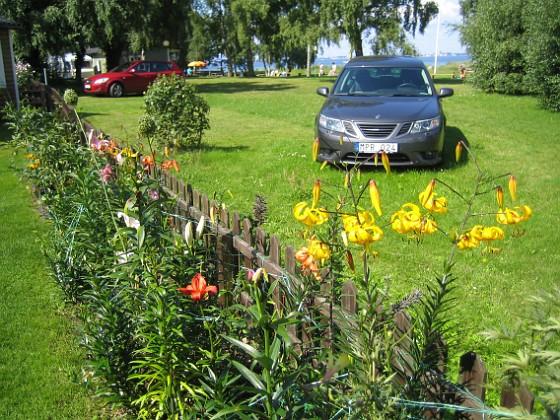 Liljor &nbsp 2011-08-02 IMG_0026 Granudden Färjestaden Öland