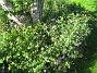 IMG_0054  2011-08-18 IMG_0054