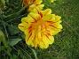 Tulpan Detta är tredje veckan i rad som jag tar blommor på dessa oerhört vackra tulpaner. 2012-05-11 007