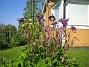 Akleja Nu har dessa vackra aklejor slagit ut. 2012-05-20 IMG_0012