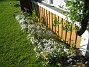 IMG_0023 Först nu ser man hur vitt det här egentligen blir med alla morgonstjärnor. 2012-05-27 IMG_0023