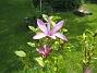 Magnolia  2012-05-28 IMG_0005