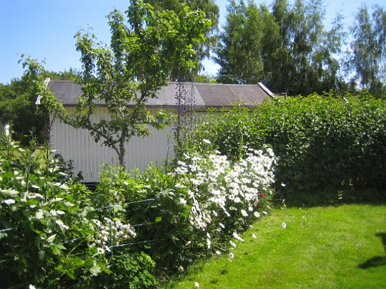 Prästkrage  2012-06-19 IMG_0020 Granudden Färjestaden Öland