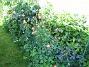 IMG_0018  2012-06-19 IMG_0018