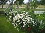 Prästkrage  2012-06-29 IMG_0034