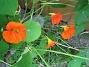 Krasse  2012-06-29 IMG_0036