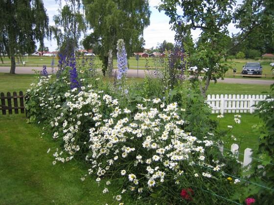 Prästkrage Prästkrage&nbsp 2012-07-02 IMG_0049 Granudden Färjestaden Öland