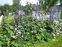 IMG_0011  2012-07-07 IMG_0011