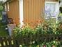 Studentnejlika Brinnande Kärlek  2012-07-07 IMG_0019