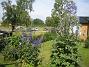 Riddarsporre  2012-07-07 IMG_0026