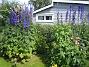 Riddarsporre Riddarsporre 2012-07-07 IMG_0039