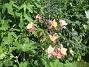 Pastellakleja  2012-07-07 IMG_0041