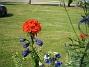 IMG_0083  2012-07-07 IMG_0083