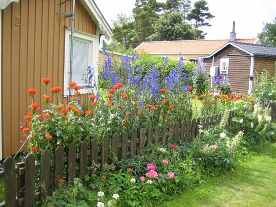 Studentnejlika &nbsp 2012-07-10 IMG_0020 Granudden Färjestaden Öland