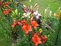 Liljor  2012-07-10 IMG_0008