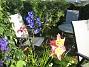IMG_0046  2012-07-12 IMG_0046