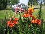 Liljor  2012-07-15 IMG_0045