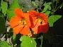 Krasse  2012-07-15 IMG_0069