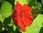 Krasse  2012-07-15 IMG_0072