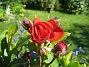 Rosor  2012-07-15 IMG_0078