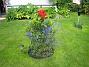 IMG_0013  2012-07-22 IMG_0013