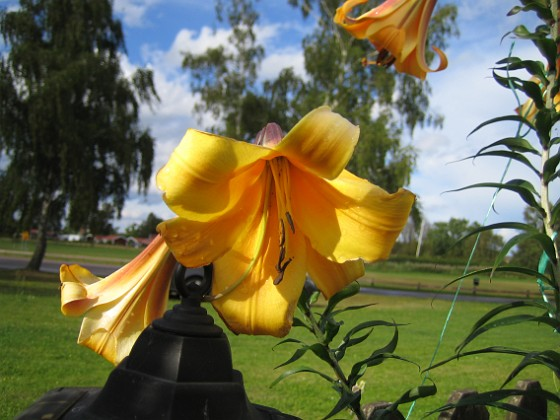 2012-08-07 IMG_0013 Granudden Färjestaden Öland
