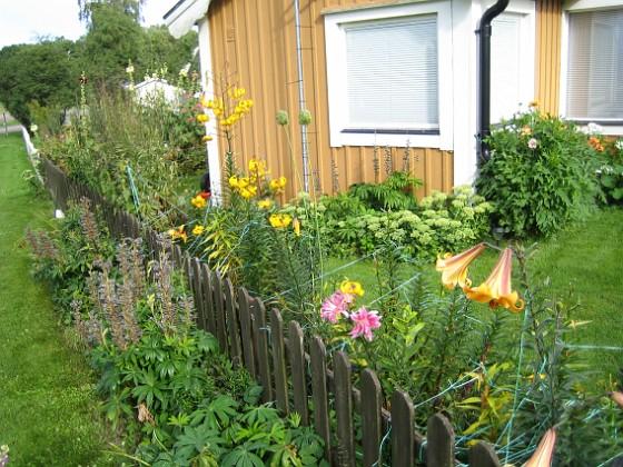 Liljor &nbsp 2012-08-07 IMG_0034 Granudden Färjestaden Öland