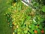 IMG_0020  2012-09-16 IMG_0020