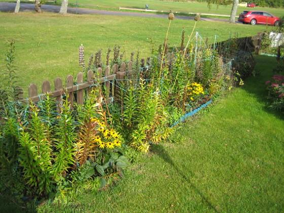 Granudden Liljorna är i de flesta fall fortfarande gröna. Snart är det dock dags att rycka upp dem och plantera ut de små sidolökarna.&nbsp 2012-09-29 IMG_0002 Granudden Färjestaden Öland