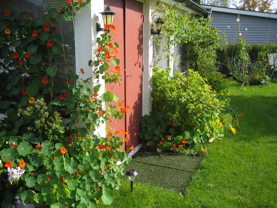 Man hittar knappt in på altanen för alla blommor. 2012-09-29 IMG_0009 Granudden Färjestaden Öland