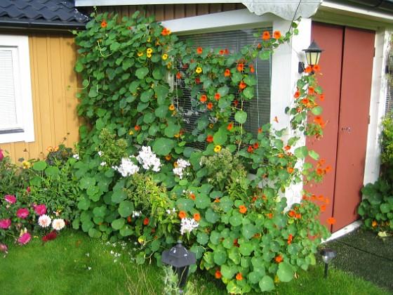 Vinkeln Grönt är det i alla fall.&nbsp 2012-09-29 IMG_0053 Granudden Färjestaden Öland