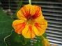 Denna färgen var extra fin. (2012-09-29 IMG_0043)