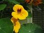 Krasse  2012-09-29 IMG_0046