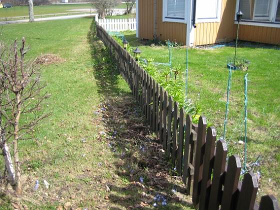 Granudden Jag har även fått lite blommor på utsidan av staketet. Vårstjärnorna förökar sig gärna och så här års ser man flera trädgårdar som är precis fulla av dessa blommor.&nbsp 2013-04-28 IMG_0002 Granudden Färjestaden Öland