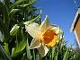 Narciss  2013-05-04 IMG_0013
