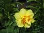 Narciss  2013-05-09 IMG_0012