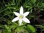 Morgonstjärna  2013-05-18 IMG_0019