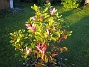 Magnolia  2013-06-06 IMG_0004