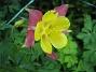 Akleja  2013-06-27 IMG_0040
