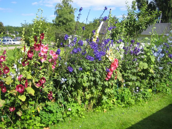 Bakgården  2013-07-20 IMG_0099 Granudden Färjestaden Öland
